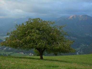Drevo s kraljevskim razgledom